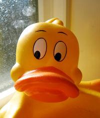 512px-Rubber_duck.jpeg