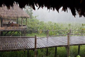 800px-Rainy_huts_Equador