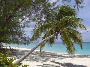 Playa_de_Gran_Caimán-Islas_Caimán03