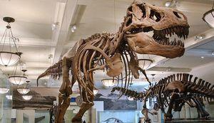 Tyrannosaurus-rex_imagelarge