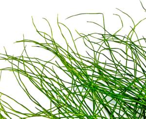 Weeds-1-1191496